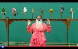 dal Mondo: animali  uccelli  india  religione