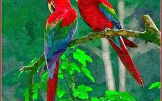 colorati  creazione  pappagalli