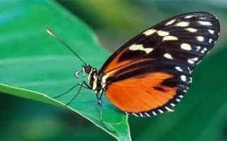Animali: anima  colori  farfalla  fate  psiche