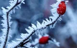 Giardinaggio: neve   innesti   semine