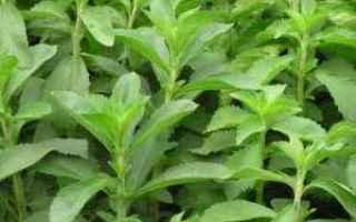 Salute: stevia zucchero usi ricette