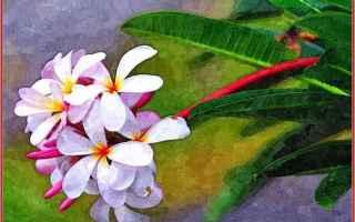 rodin  elaborazioni grafiche  fiori