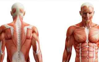 Salute: anatomia medicina android studio corpo