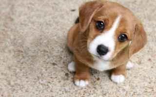 Animali: cane