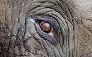 Storia: elefanti  annibale  amilcare  cartagine
