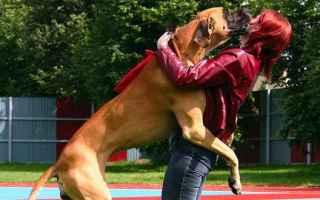 Animali: educazione cane  cani