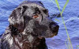 Animali: salvataggio cani  cani  crotone