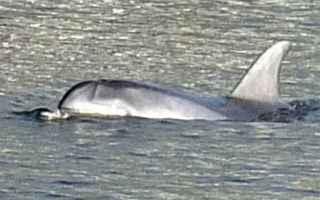 Firenze: delfino  arno