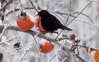 inverno  stagioni