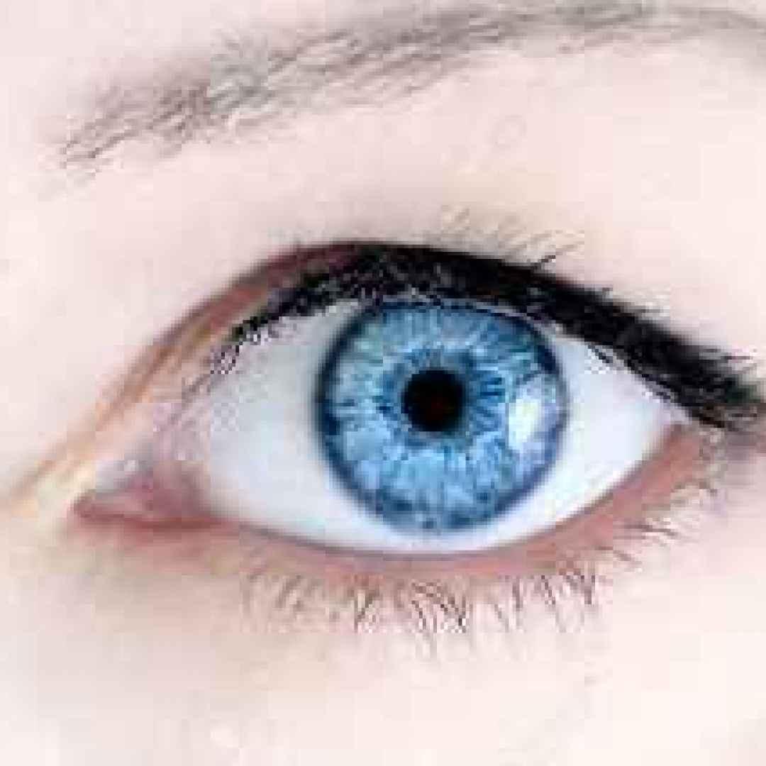 occhi  biologia  evoluzione