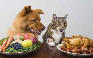 gatto  alimenti gatti