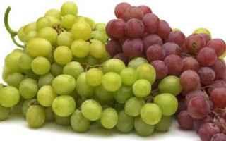 Psiche: alzheimer  uva