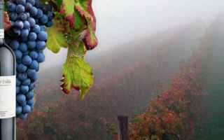 Gastronomia: nebbiolo  vino  vino rosso  vino italiano