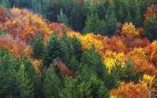 Notizie locali: national geographic  calabria  paesaggio