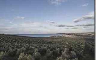 Palermo: sicilia  menfi  olio  planeta