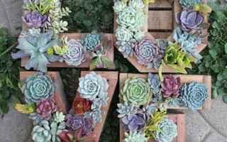 Moda: matrimonio  piante grasse  fiori