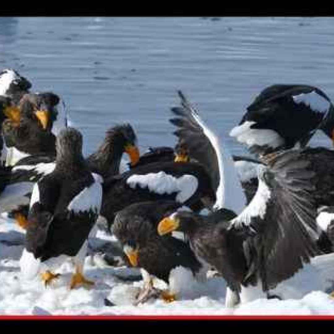 animali  uccelli  aquile  storia  russia