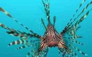 https://diggita.com/modules/auto_thumb/2017/03/28/1588167_una-foto-del-velenoso-pesce-scorpione_1236433_thumb.jpg