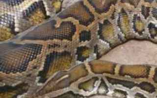pitone ragazzo serpente vittima