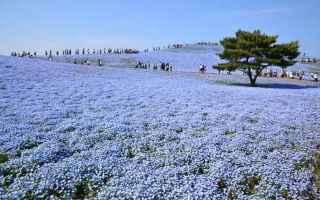 https://diggita.com/modules/auto_thumb/2017/04/10/1589943_Hitachi-Seaside-Park-640x424_thumb.jpg