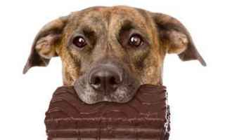 Animali: cane  gatto  cioccolato  pasqua