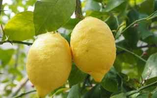 Alimentazione: limone  proprietà del limone