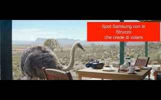 Filmati virali: samsung pubblicità video struzzo