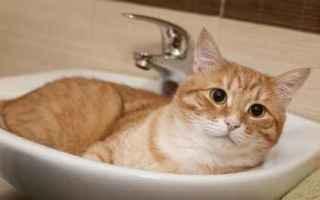 Animali: gatto  pelo  unghie