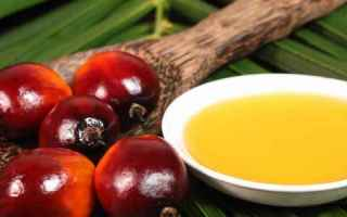 Alimentazione: olio palma oliodipalma grassi saturi