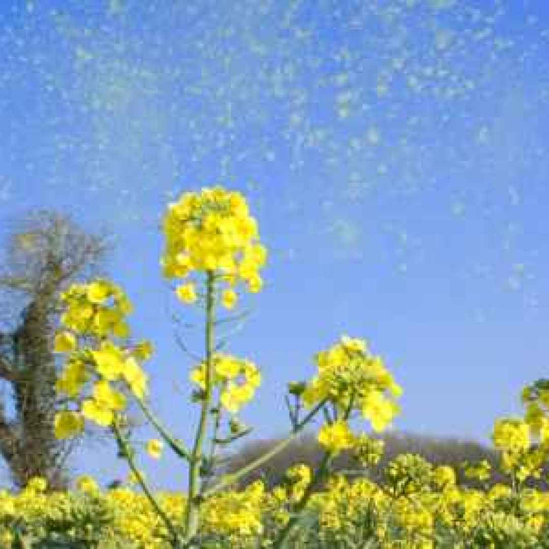 allergie primavera allergiestagionali