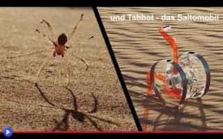 Animali: animali  aracnidi  ragni  deserto