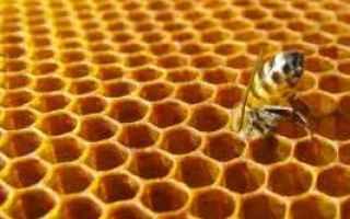Ambiente: plastica  galleria mellonella  api  cera
