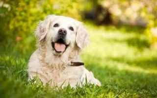 Animali: cane  alimenti cani  veterinario
