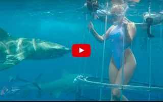 Filmati virali: pornostar  squalo