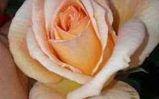 Sentirsi fragili dinanzi alle difficoltà della vita. Avere paura di continuare, il rischio, i