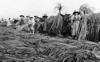 Storia: canapa garfagnana coltivazioni macero