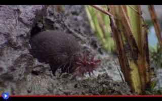 Animali: strani animali  evoluzione  talpe