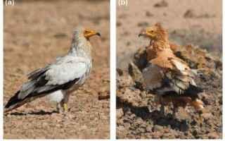 Animali: animali  uccelli  sparvieri  egitto
