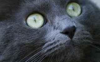 Animali: gatto  congiuntivite  veterinario