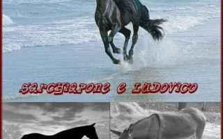 Cultura: asinello  calesse  cavallo  totò