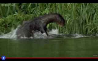 Animali: animali  lontre  brasile  predatori