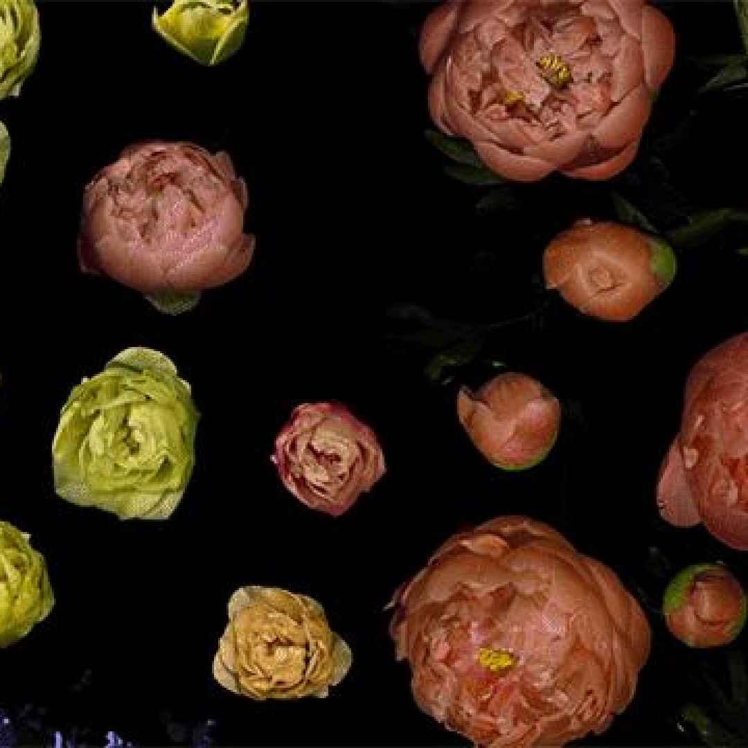 video  film  fiori