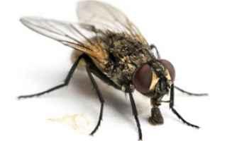 mosche rimedi natura