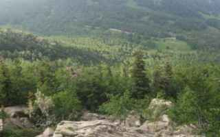L' abete bianco è un albero sempreverde e monoico, ovvero su di una stessa pianta presenta sia fi