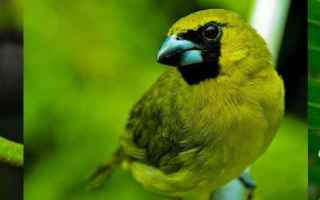 Animali: mammifero  mammiferi  verde  colore