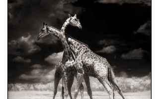 bianco e nero  fotografia  animali