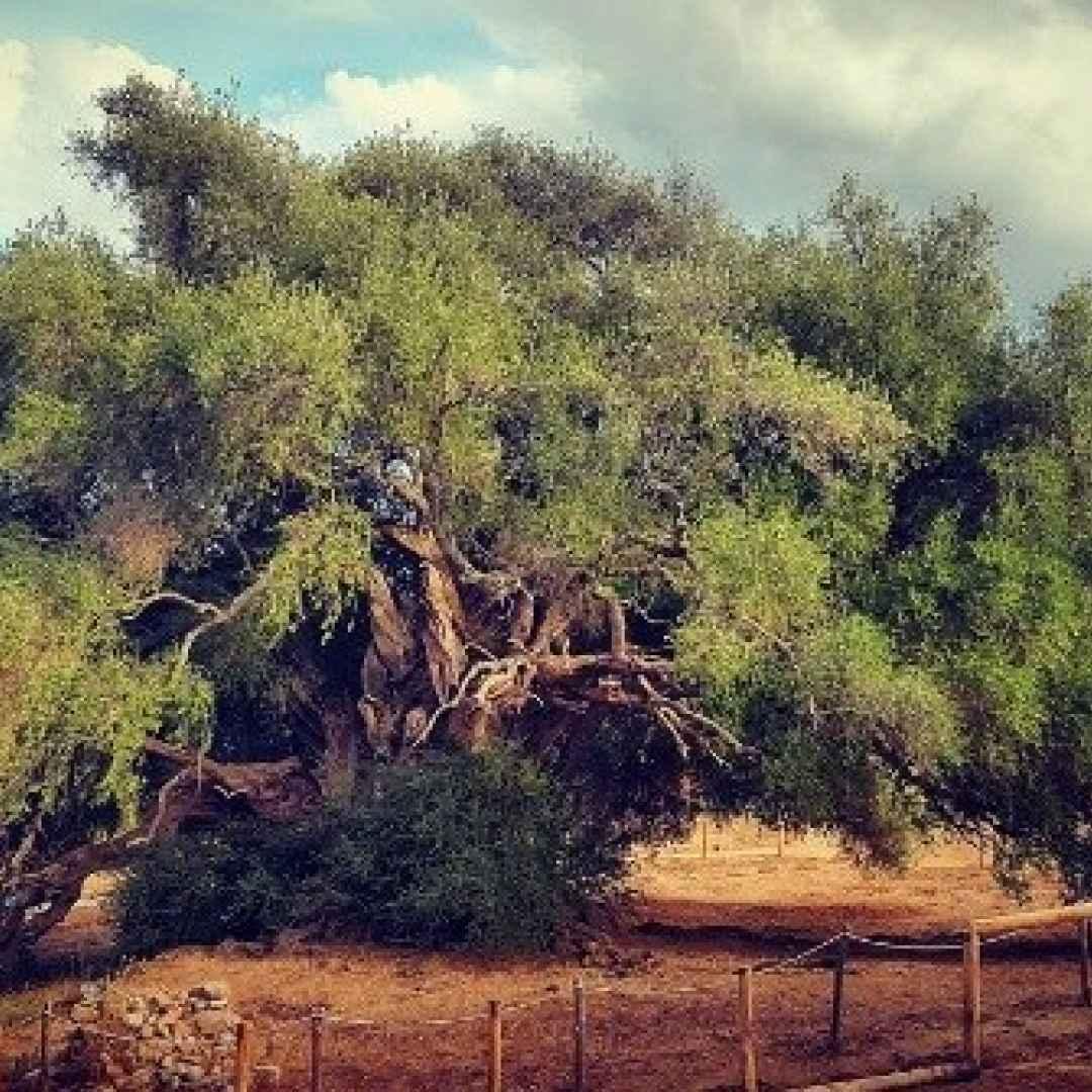 ambiente  alberi  foreste  turismo  news