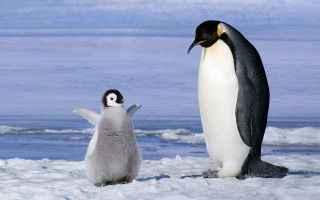 Ambiente: ambiente  animali  clima  antartide