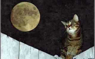 Cultura: ode al gatto  pablo neruda  poesia