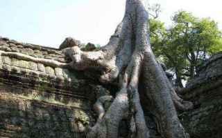 Viaggi: sudest asiatico  thailandia  viaggi